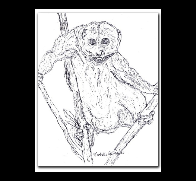 hangingsloth